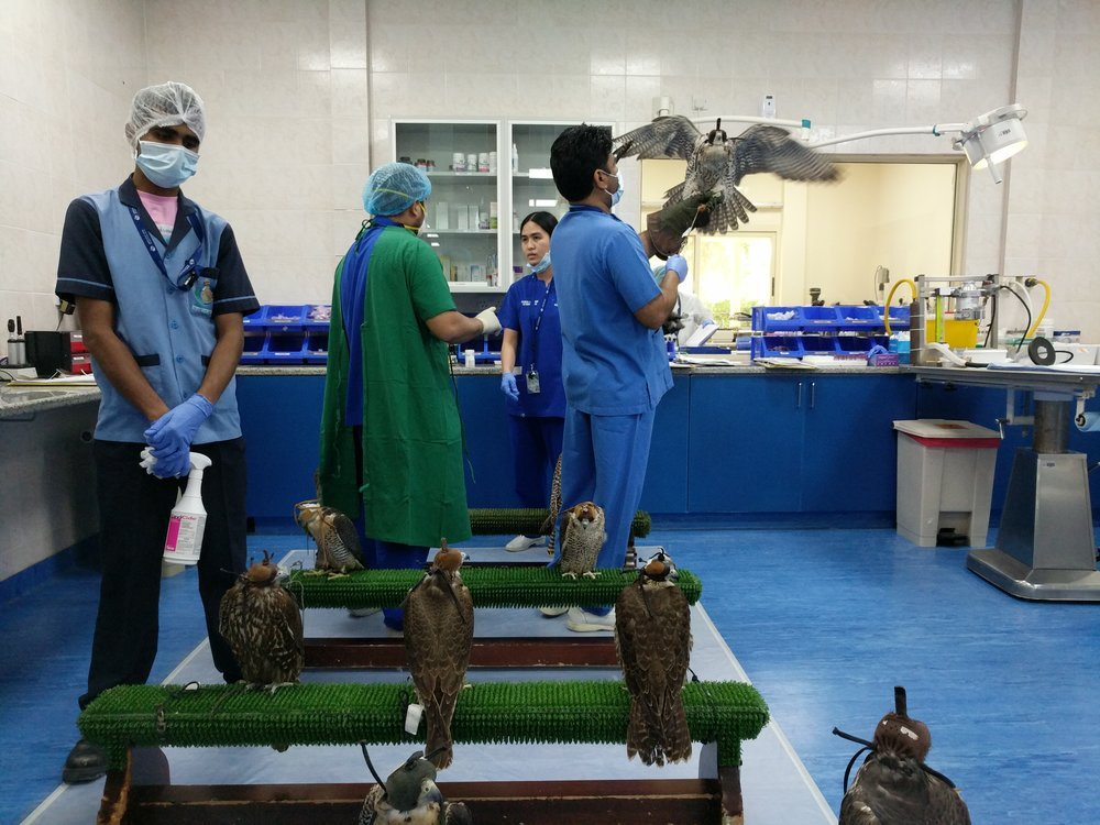 11 Things to do in Abu Dhabi The Travel Women Falcon Hospital