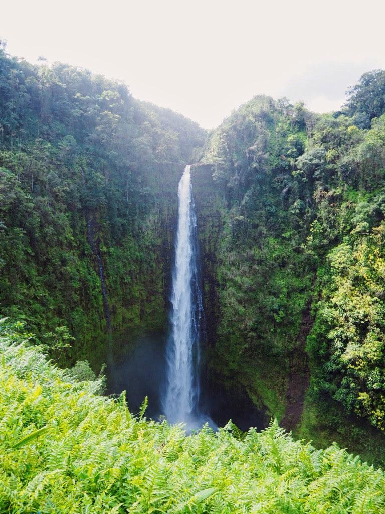 Akaka Falls Top 11 Things to do in Hawaii