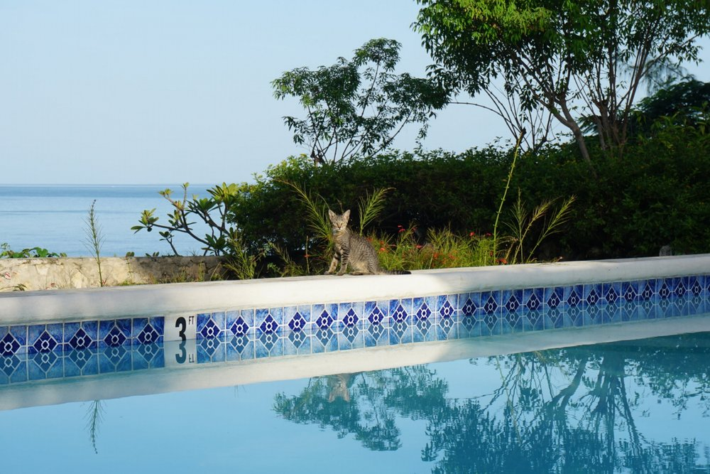 Bluefields Bay Villas Jamaica Resort Review The Travel Women property pets dogs and cat