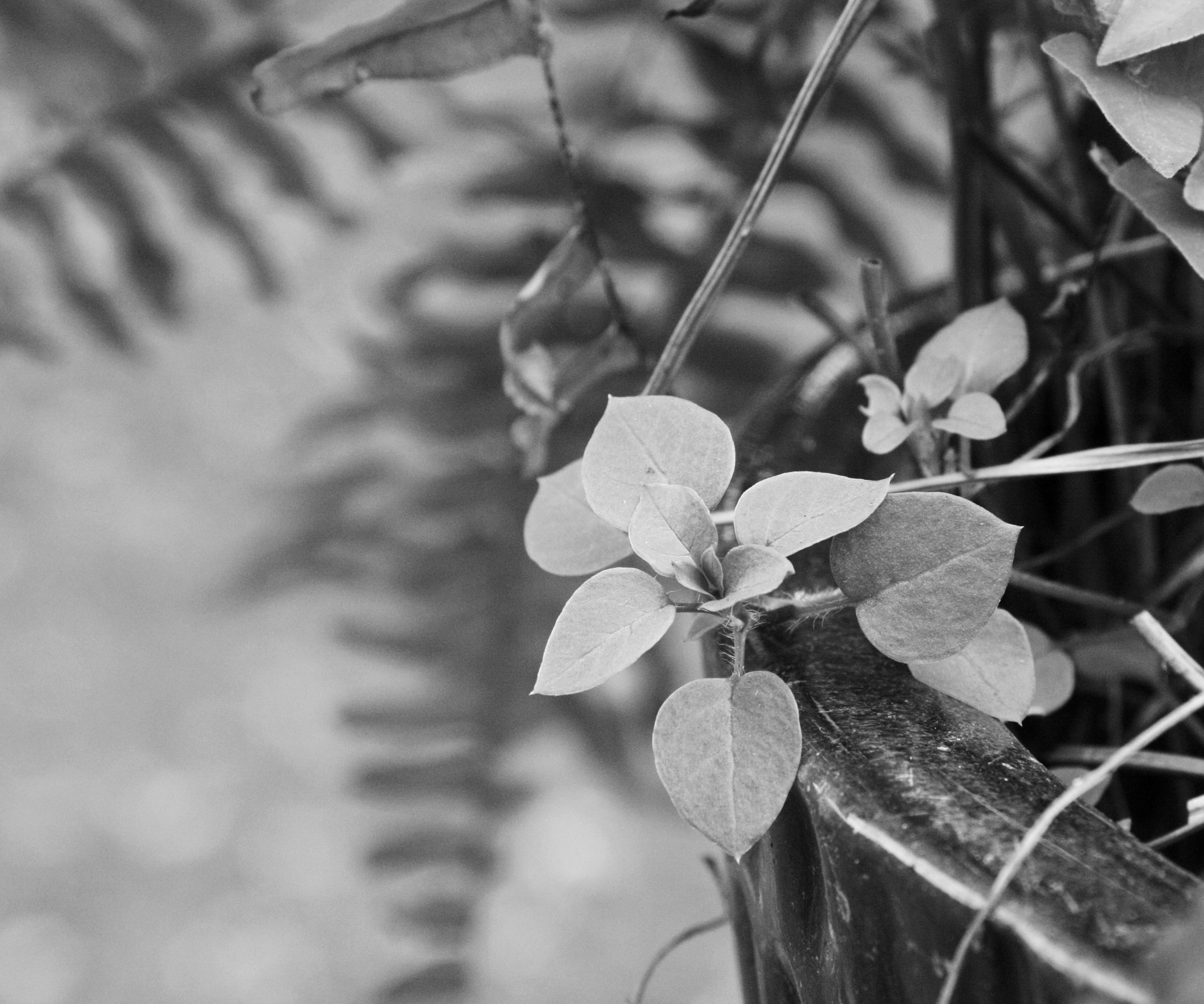 leaves, plants, ferns