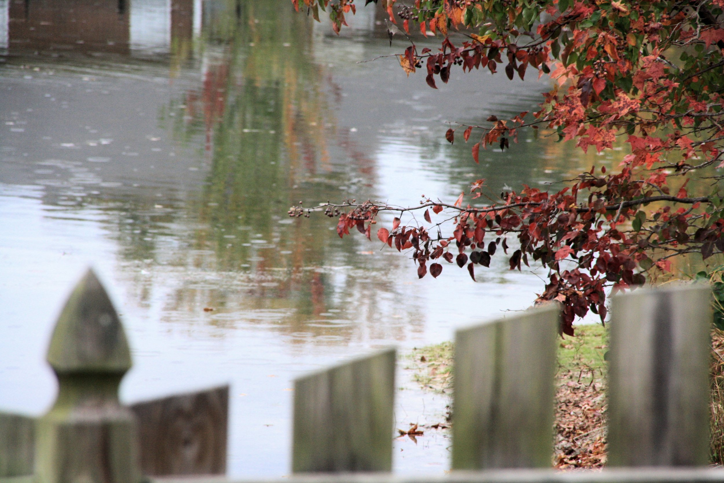 Photo of Picket Fence with Red Autumn Leaves and Pond by TorchFire Studio