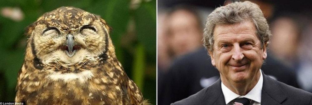 owl roy.jpg