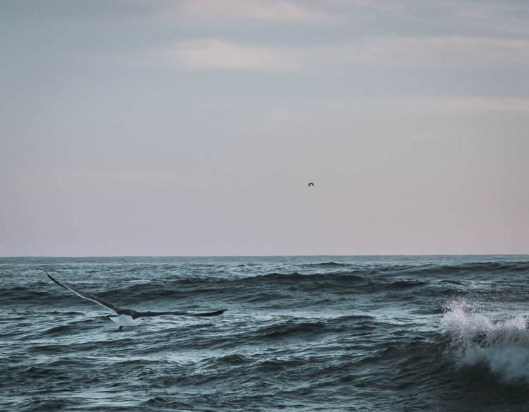 seafoam soaring