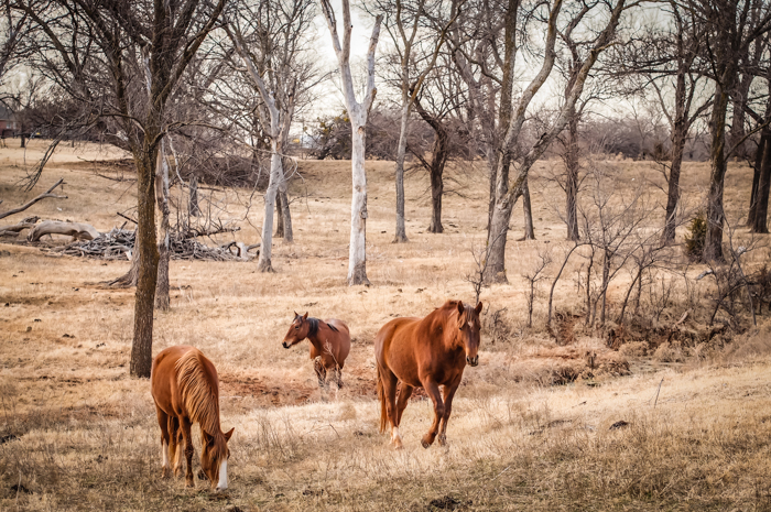 horses three-2.jpg