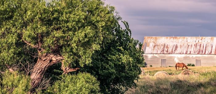 tree horse barn 2.jpg