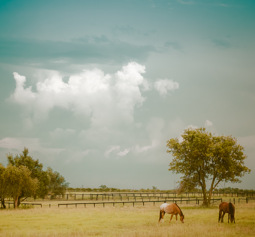 horses country.jpg