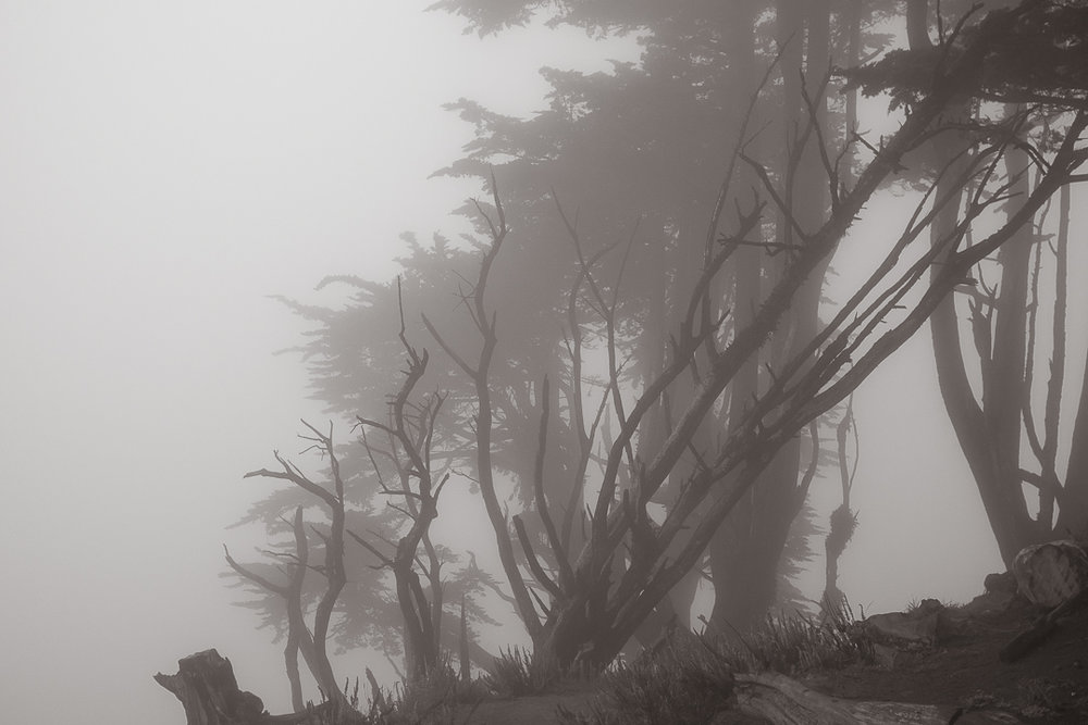 trees and fog.jpg