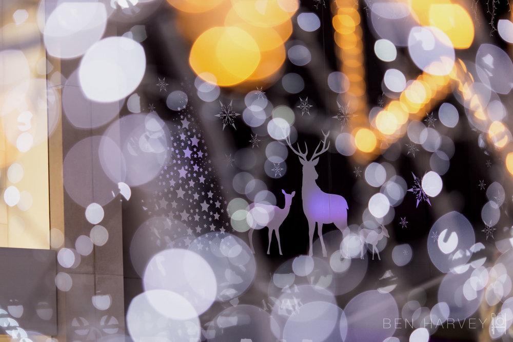 Brighton Christmas Decorations
