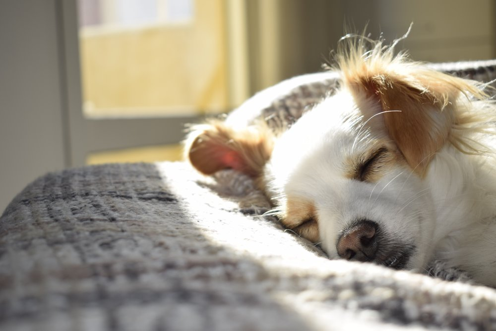 With these handy sleep tips, you'll be sawing logs just like this pup in no time!