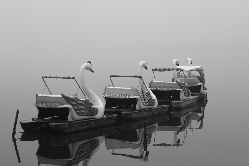 Creepy swans.jpg