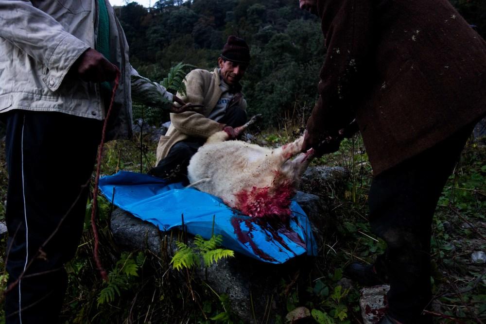 Bloody Goat