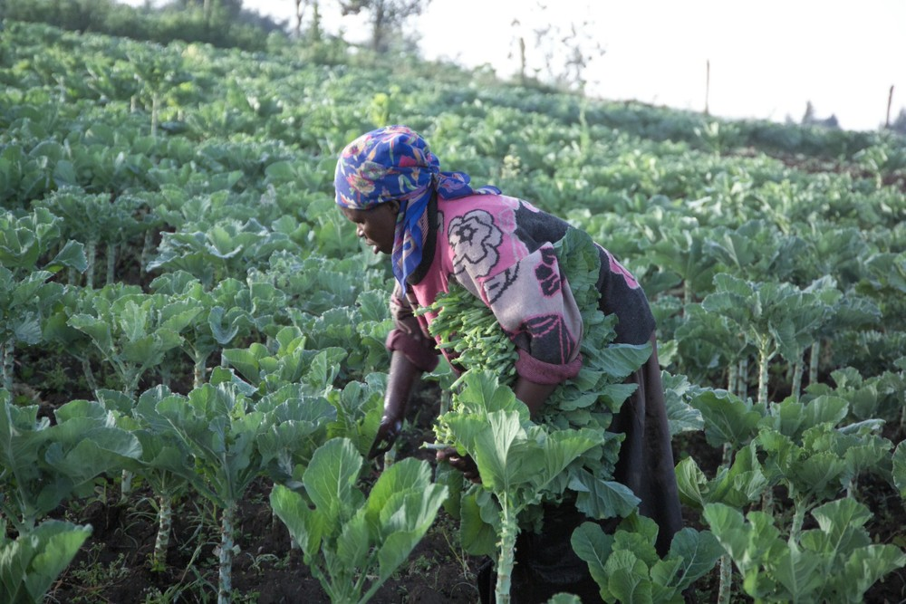ENTERPRISE Sustainability is the operative word if you are going to have meaningful long-term success in Africa, and First Love Ministries is impassioned to identify outcomes that would lead to a legacy of self-sufficiency and enterprise development.