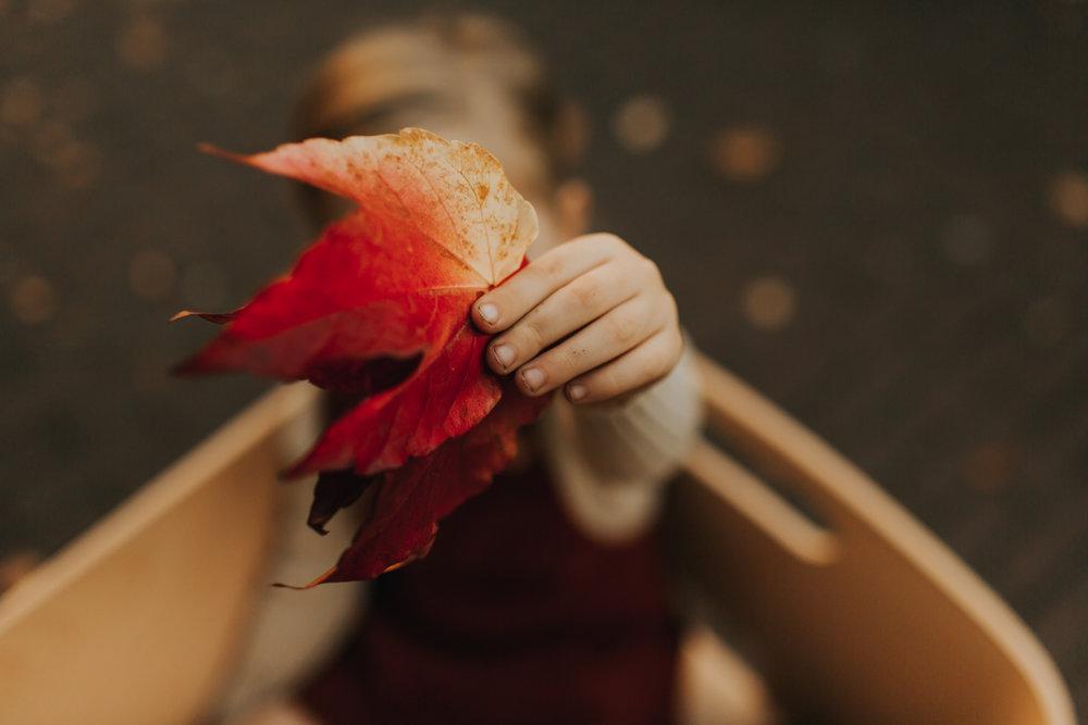 Jipfish-Fall-25.jpg