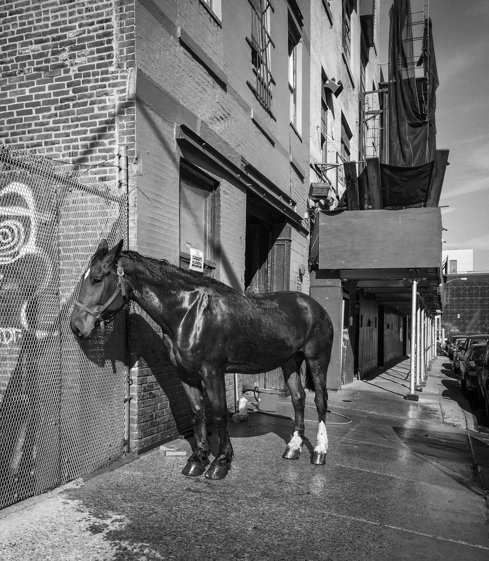 NYC Horse