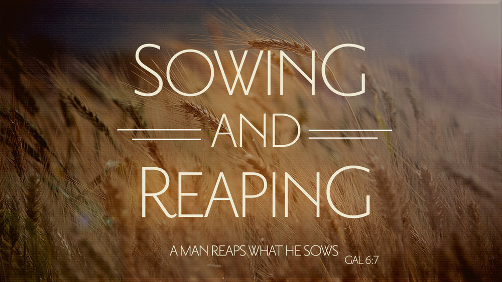 FEBRUARY 2017     Sowing & Reaping   |  Audio
