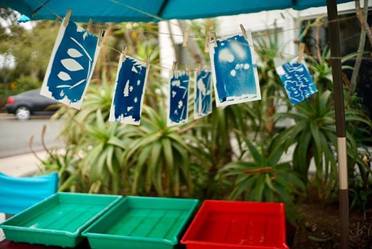 Cyanotype Photograms