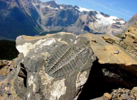 Burgess Shale Trilobite sm.jpg