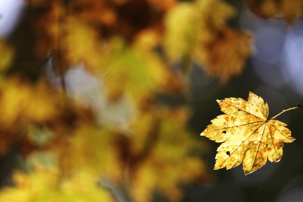 Photo Oct 05, 1 36 01 PM.jpg