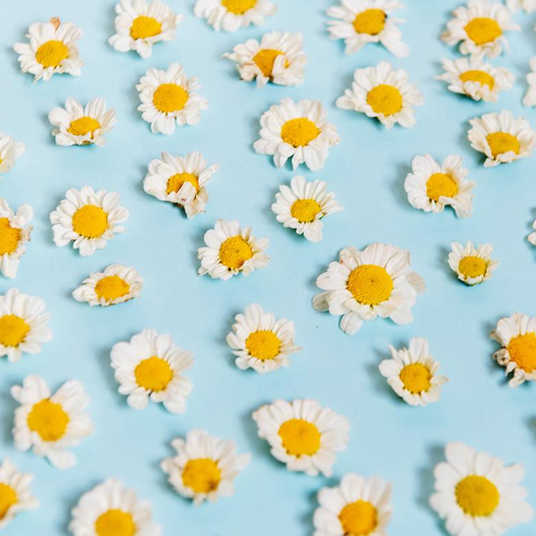 Flowers square.jpg