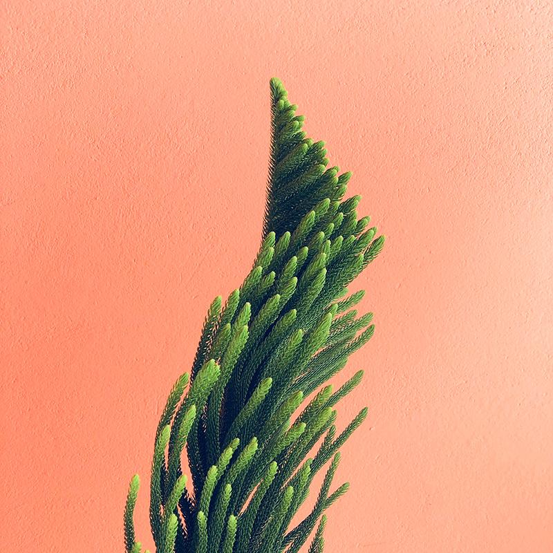 Plant square.jpg