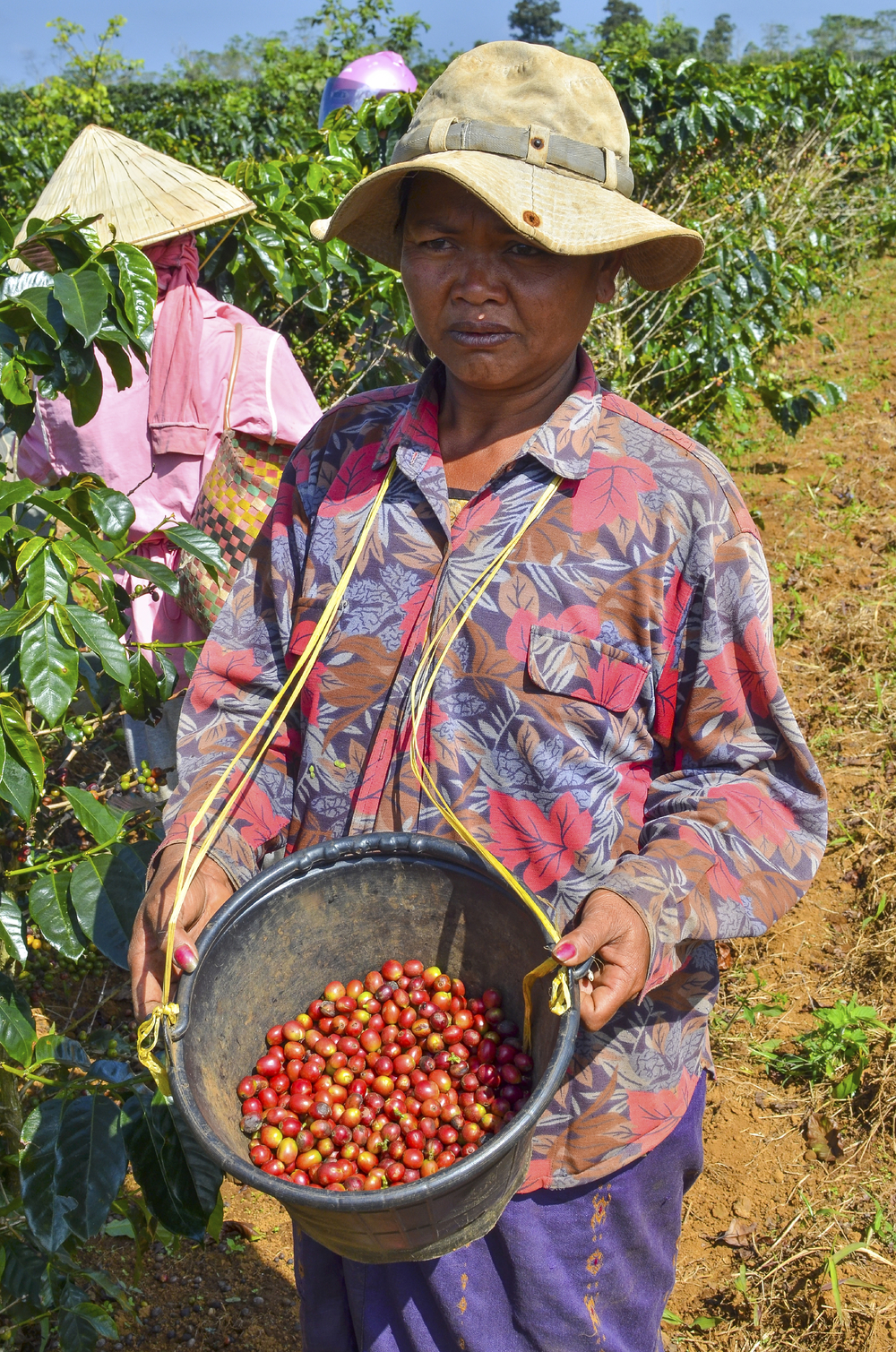 Female-farmer-with-a-bucket-of-red-arabica-coffee-berries-000037534418_Large.jpg
