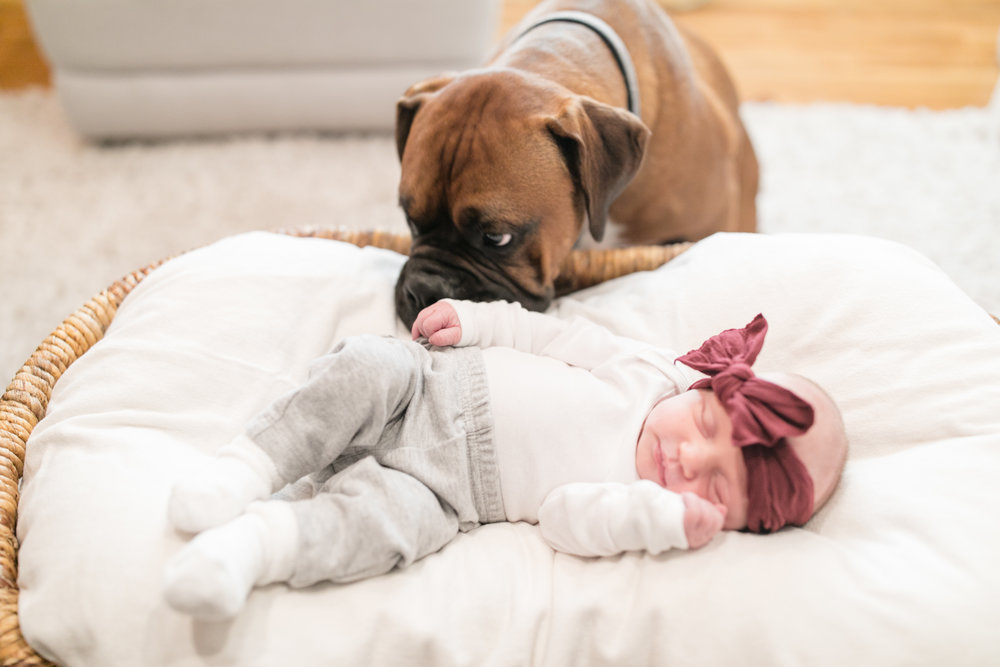 2018_portraits_maier_newborn_blog-21.jpg