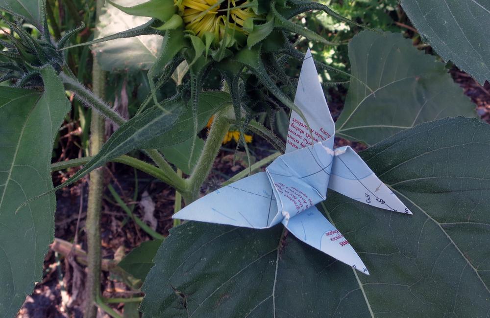 butterfly map.jpg