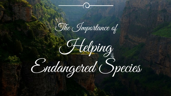 importance of endangered species