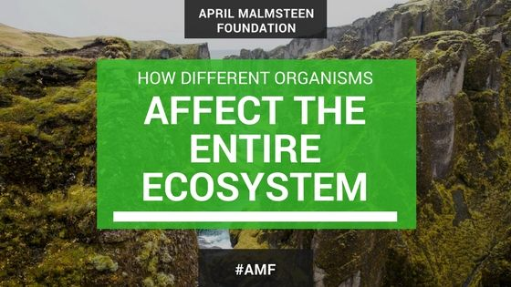 april-malmsteen-wife-organism-ecosystem