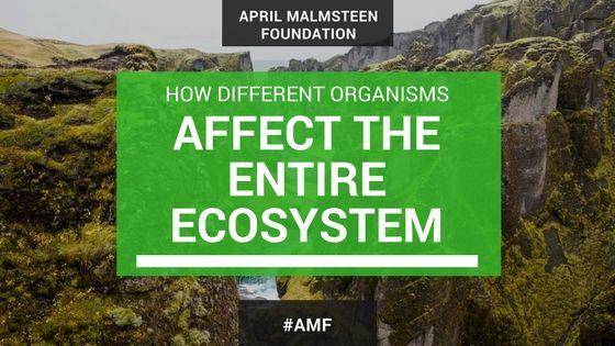 april-malmsteen-wife-organism-ecosystem