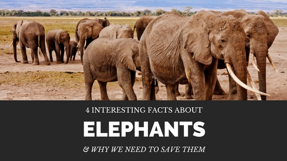 april-malmsteen-elephant-facts.jpg