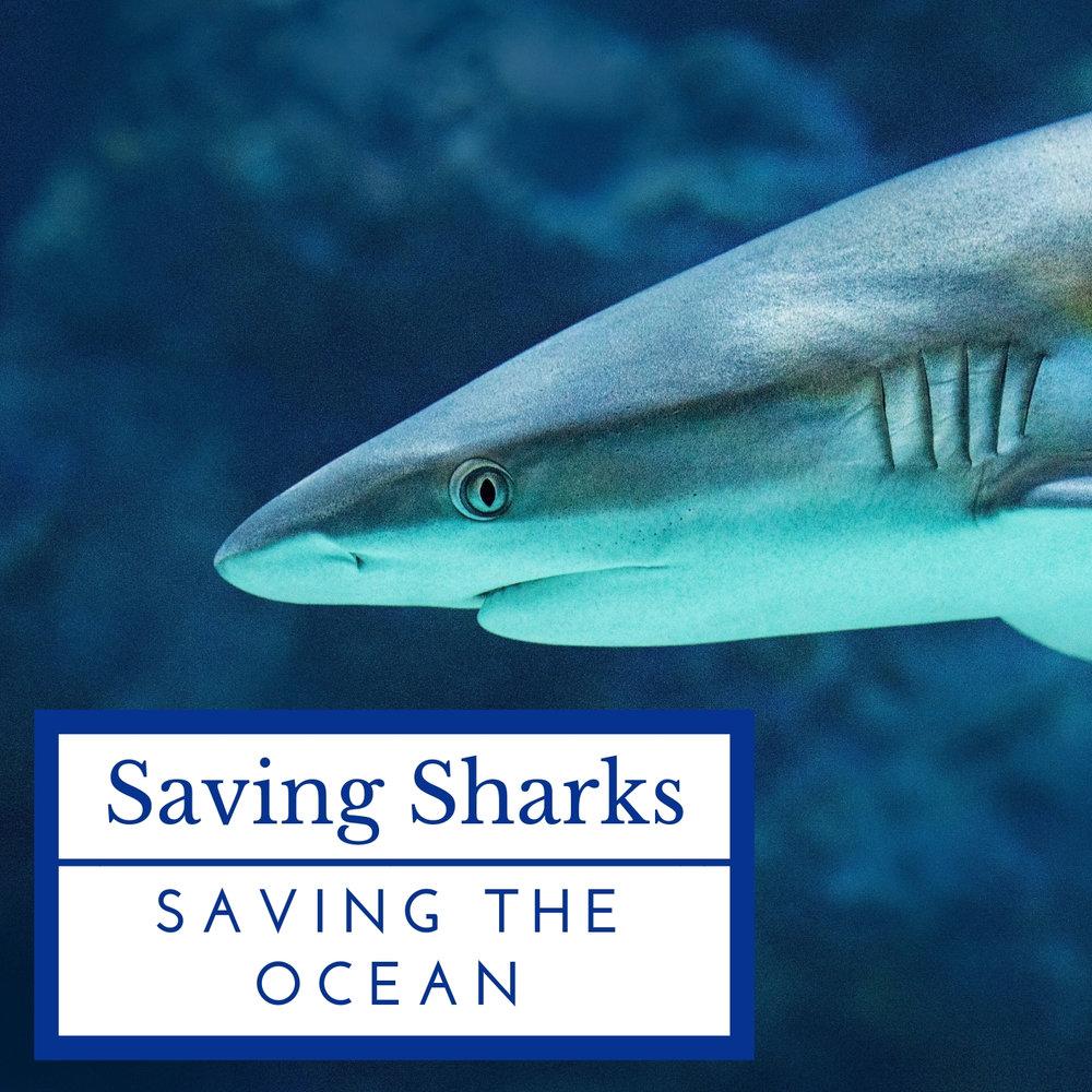 save-sharks-oceans-april-malmsteen-foundation.jpg