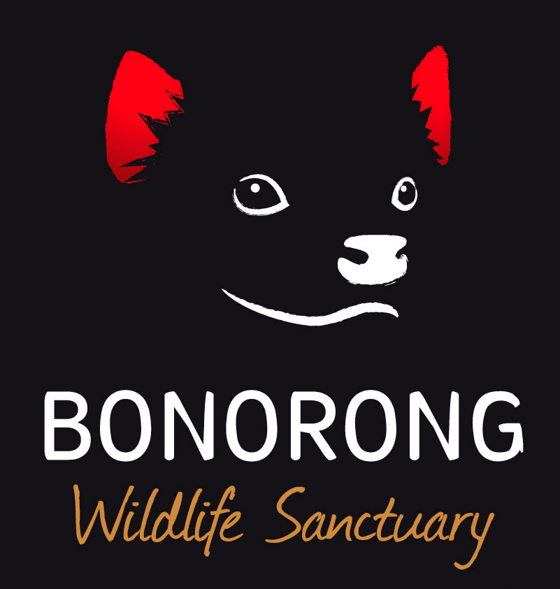 Bonorong-Full-Square.jpg