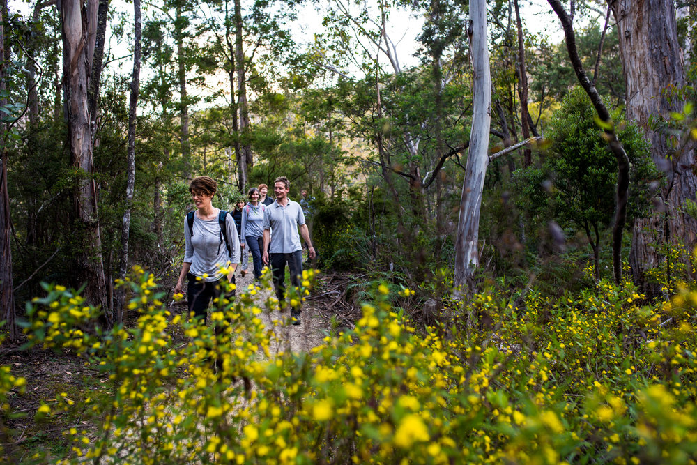 Nature Be in it Day walk in gum trees.jpg