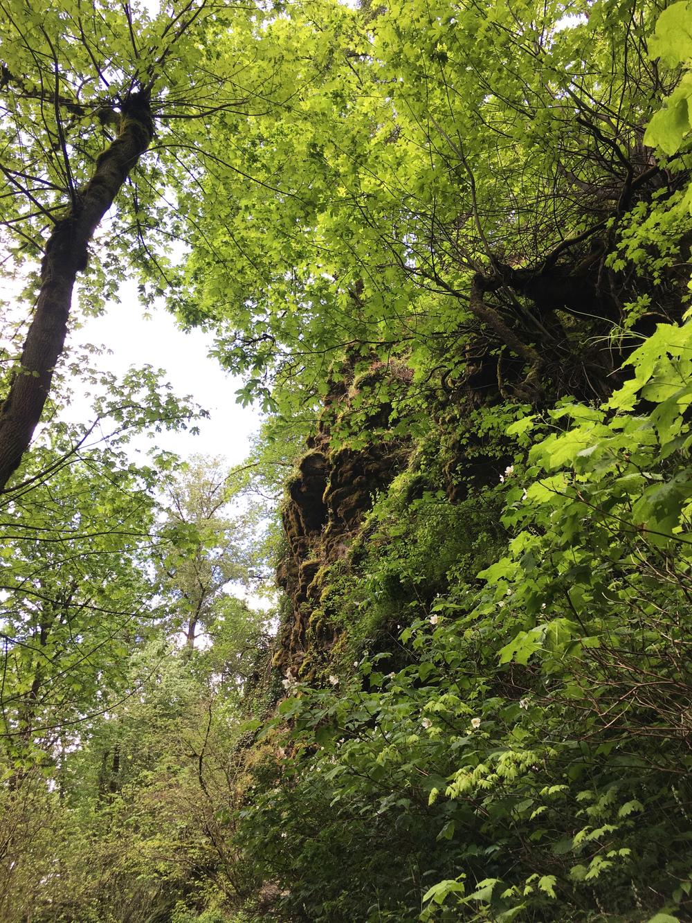 Latourell Falls Trail withmichellekim.jpg