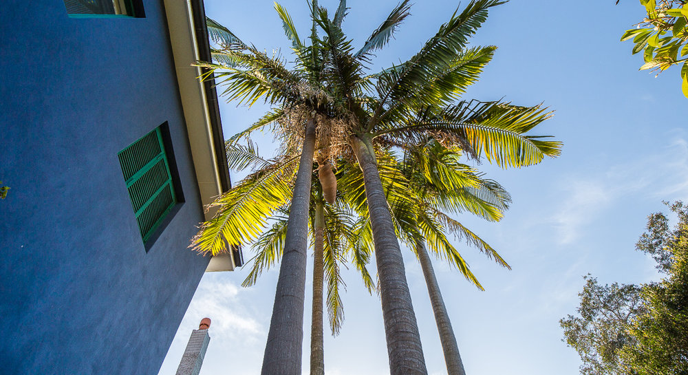 5_exterior_palms.jpg