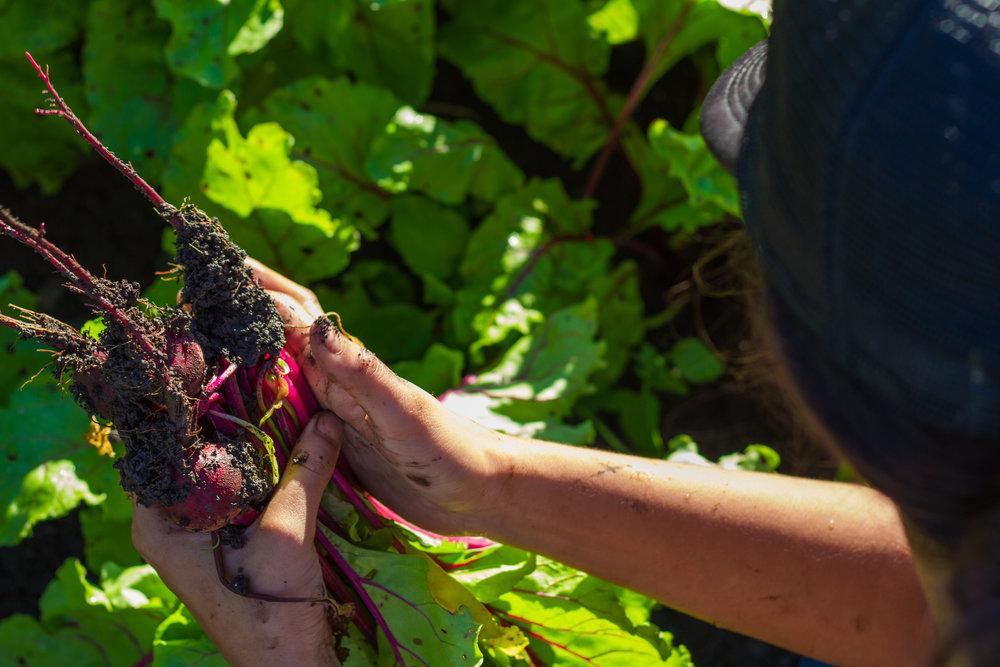 Ma'o Organic Farms