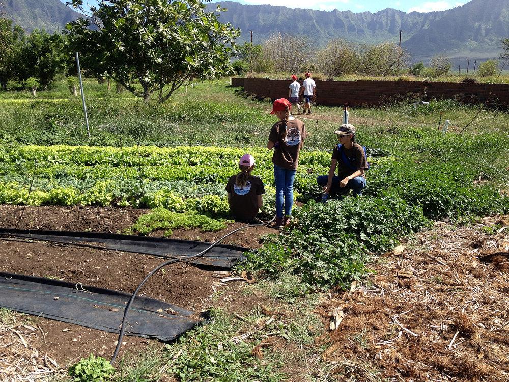 Kahumana Organic Farms