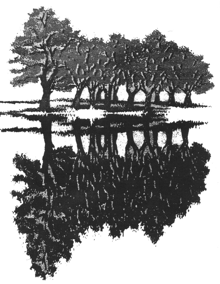 treereflection.jpg