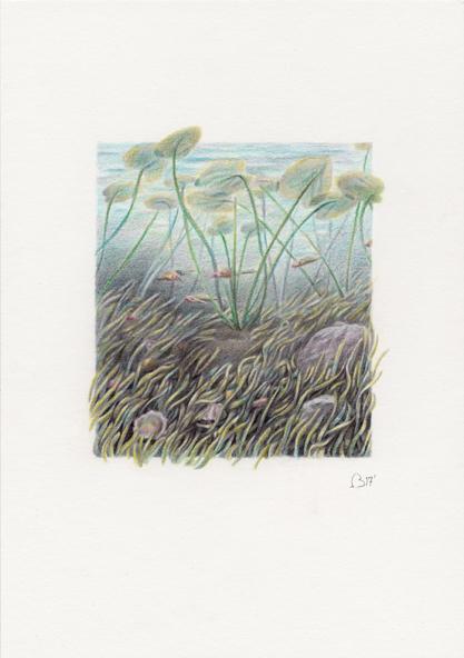 Sea grass 72.jpg
