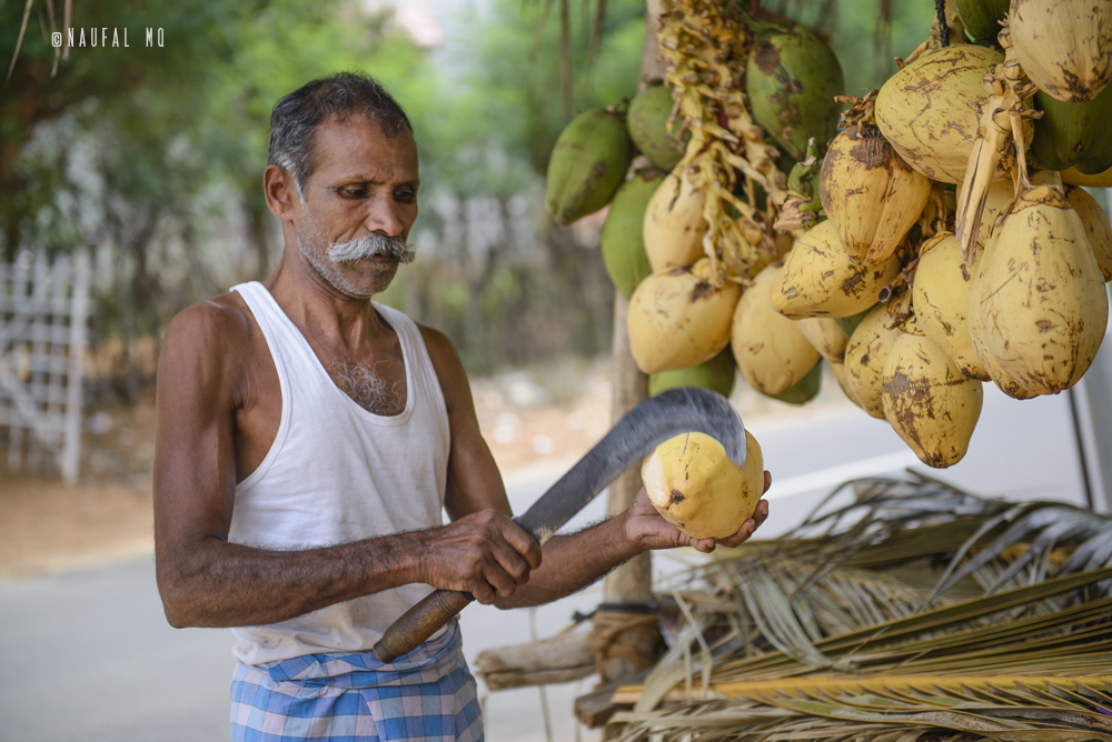 Tender coconut seller