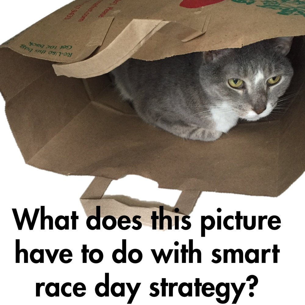 Cat_raceday.jpg