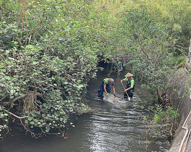 Post typhoon #mangkhut🌀 cleanups still happening across Hong Kong! 🌪💙 ... A group of volunteers in Sai Kung Country Park fishing out and catching styrofoam pieces 👏🏼💚 ... #hkcommunity #volunteer #savetheplanet #earth #banstyrofoam #cleanup