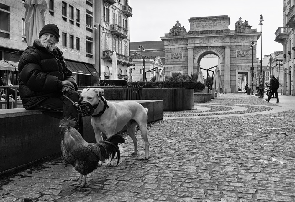 This man took his dog and rooster for a walk along Corso Como in Milan.  Porta Garabaldi is visible in the background.