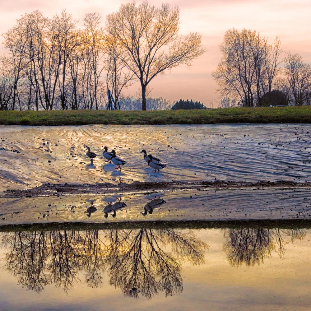 DuckPondAfter