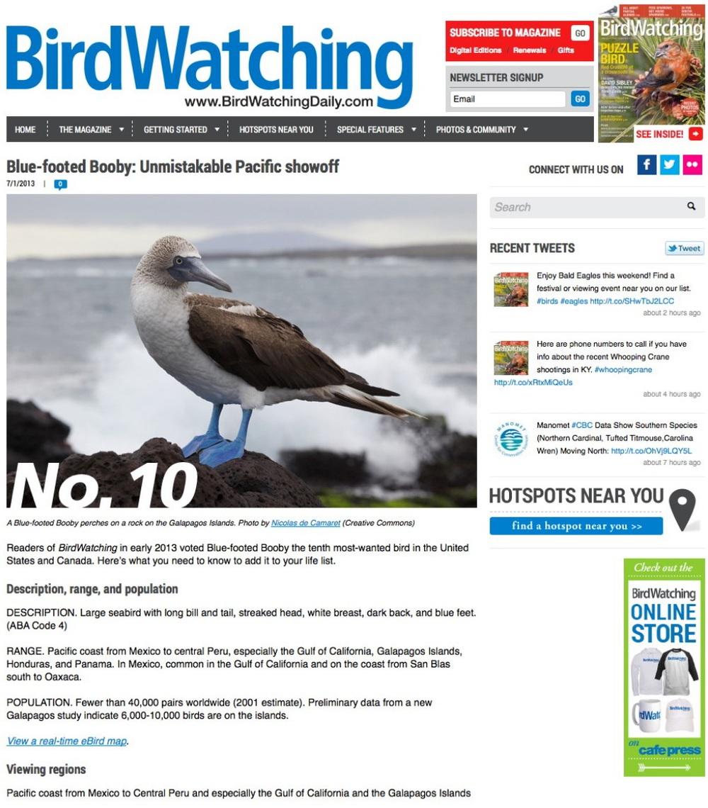 birdwatchingdaily