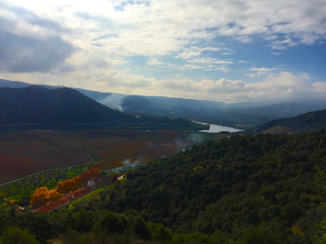 Quinta do Vale Meão vineyards