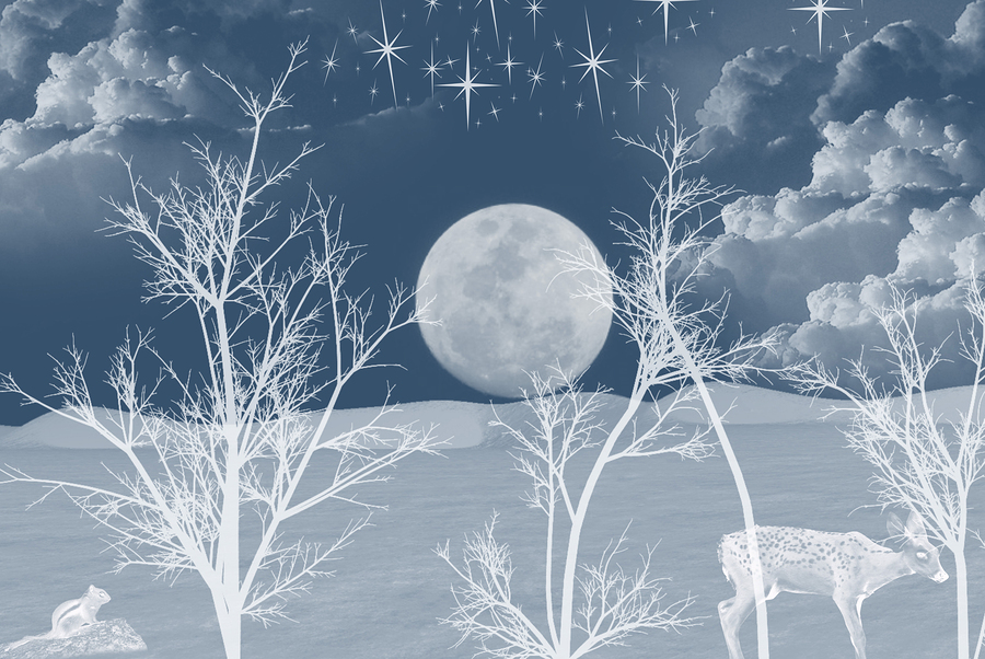 bigstock-Silent-White-Night-2233852.jpg