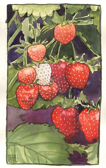 fruit1kgb15