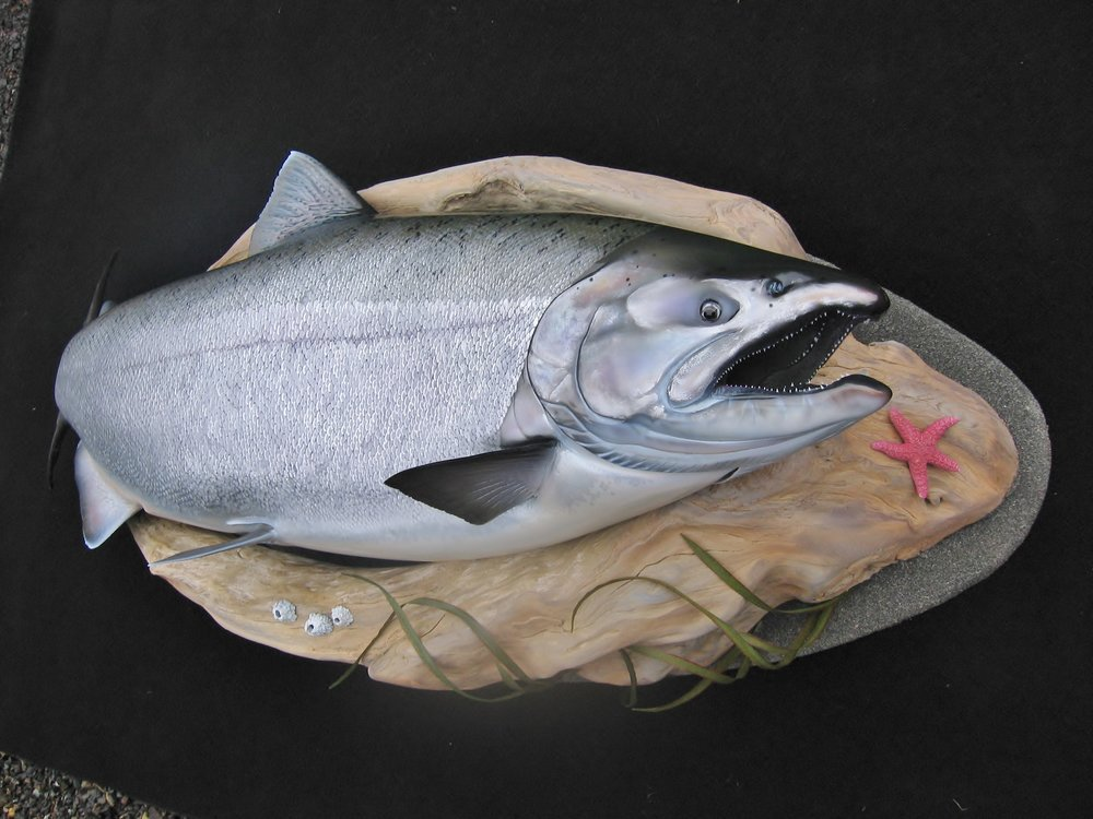 Chinook Salmon fish replica art sculpture by Luke Filmer of Blackwater